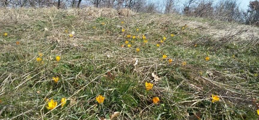 Съботни маршрути: Минзухарен килим и иманярски изкопи са пролетните изненади край Бошуля