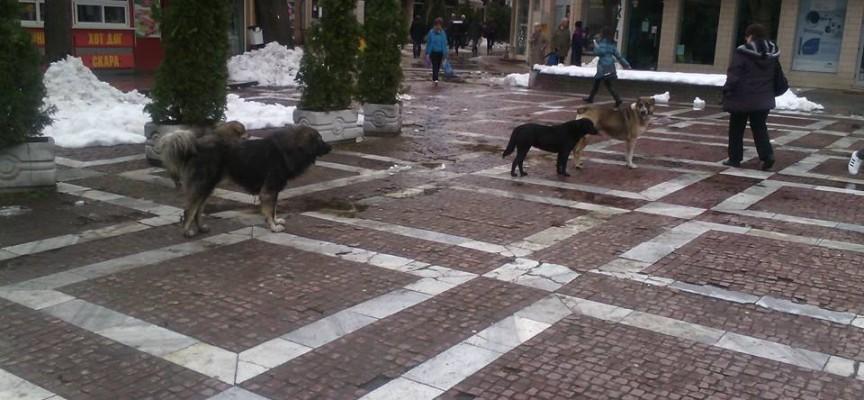Георги Козарев взе мерки срещу убийците на бездомни кучета