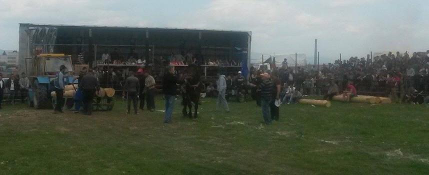 Над 2000 гледаха конски кушии във Варвара