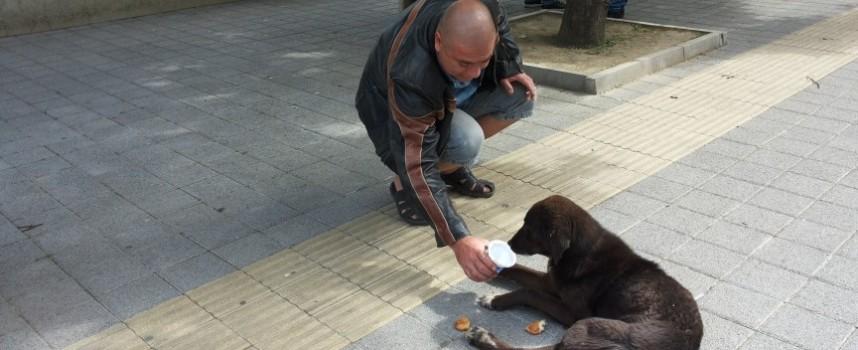 Твоята новина: Пазарджиклии се грижат за болно куче – беглец