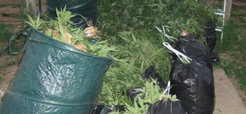 Двама братя от Пазарджик са замесени в банда за марихуана