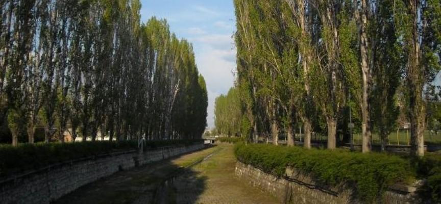 Секат 28 опасни тополи край Паша арк