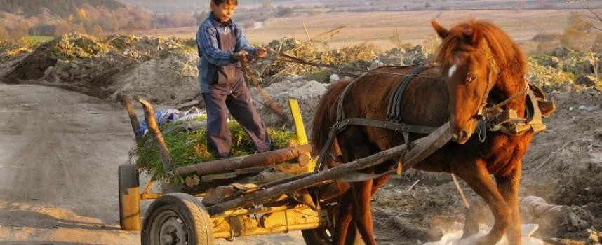 Този луд, луд свят: Ковачовец простреля кобила с незаконен пистолет