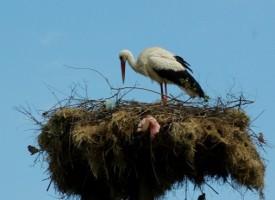 Екоинспекцията спаси четири защитени птици