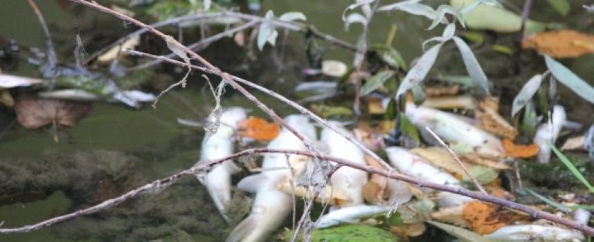 Ново замърсяване и мъртва риба в Луда Яна отчете екоинспекцията