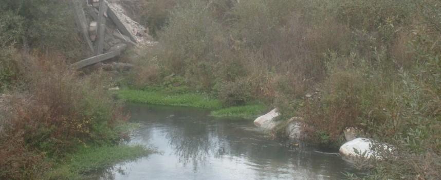Екоинспекцията констатира мъртва риба в река Луковица