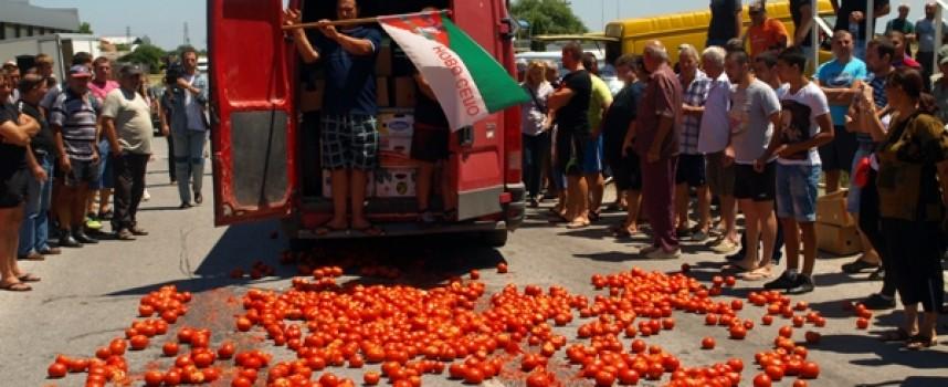 Тонове домати ще залеят пътищата, българският производител избухна в Огняново