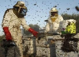 261 пчелари кандидатстват за пари по  de minimis