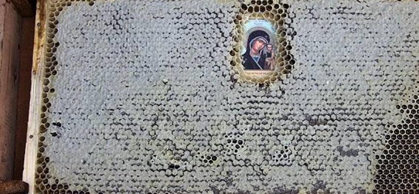 Твоята новина: Чудотворните икони на Атон се почитат и от пчелите
