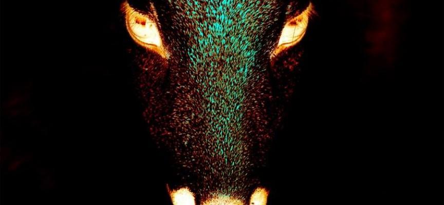 """""""Животни"""" – кураторски проект, който ще ви накара да мислите"""