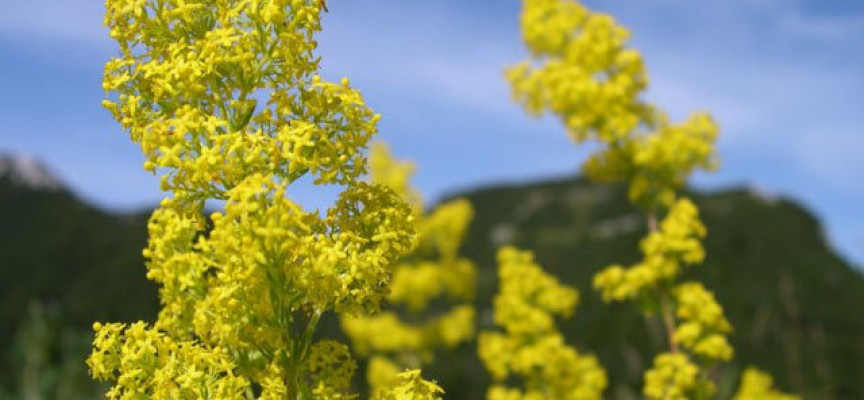 Жълт код за областта днес и в близките дни, стойте на сянка, пийте вода