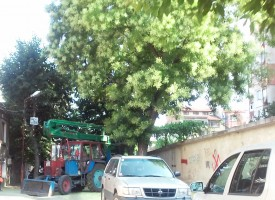 "В Пазарджик: Чистят опасни клони на ул. ""Янтра"" и ул.""Греков"""