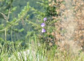 Утре: Областният управител ще чисти храсталаци край Дебращица