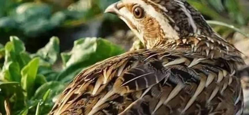 Ловците откриха сезона за пернатия дивеч