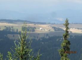 Берачките на боровинки намерили Мехмет: От немотия са отишли в гората, животно го е подплашило