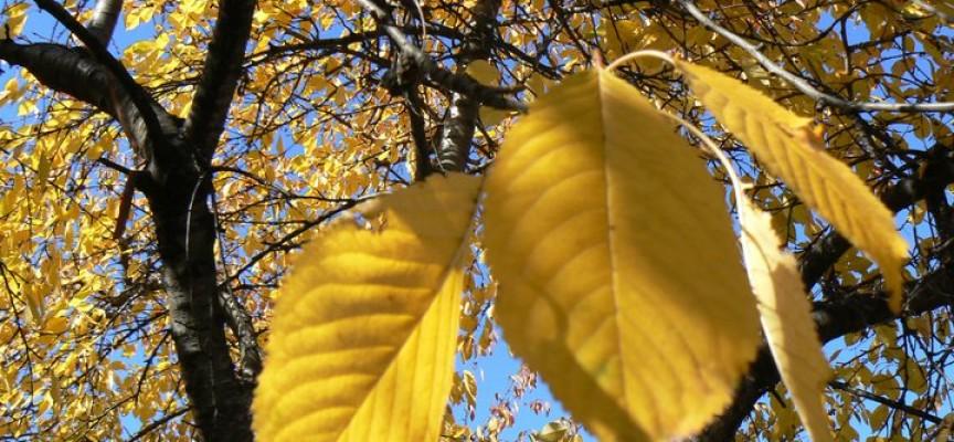 """Да кажем """"Добре дошла"""" на есента"""