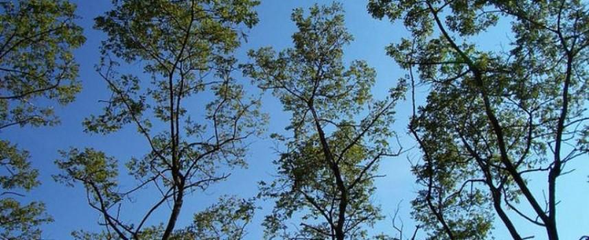 """За втори път в Пазарджик: Форум за изкуство и култура """"Кауза Природа"""""""