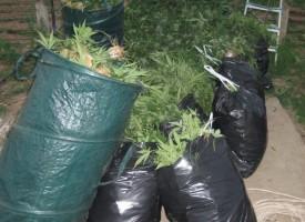 Иззеха над 18 кг. марихуана в Синитево
