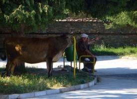 Окончателно: Без балотажи и в община Батак
