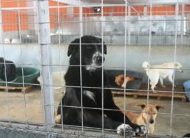 Откриха приют за кучета във Велинград