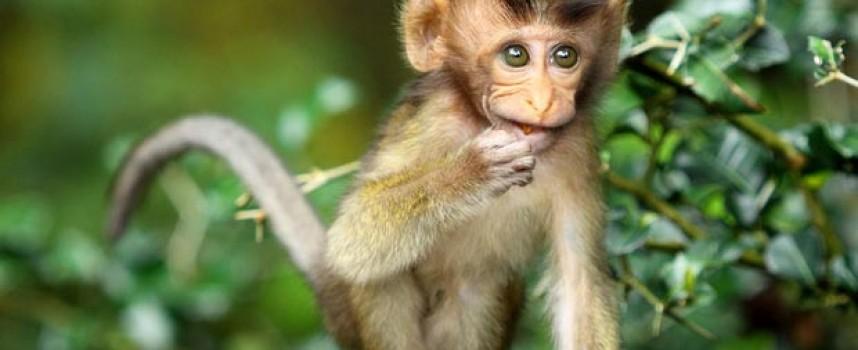 Годината на Огнената маймуна започва на 8 февруари