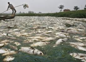 11 акта и 2 месечни санкции за замърсявания на водни тела от промишлена дейност