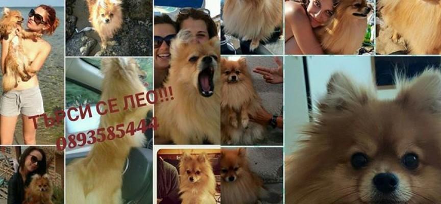 Поморийка търси кученце на име Лео, дава 2000 лв. награда