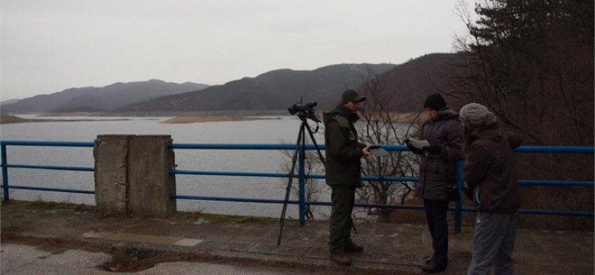 Над 800 водолюбиви птици зимуват в реки и водоеми на област Пазарджик