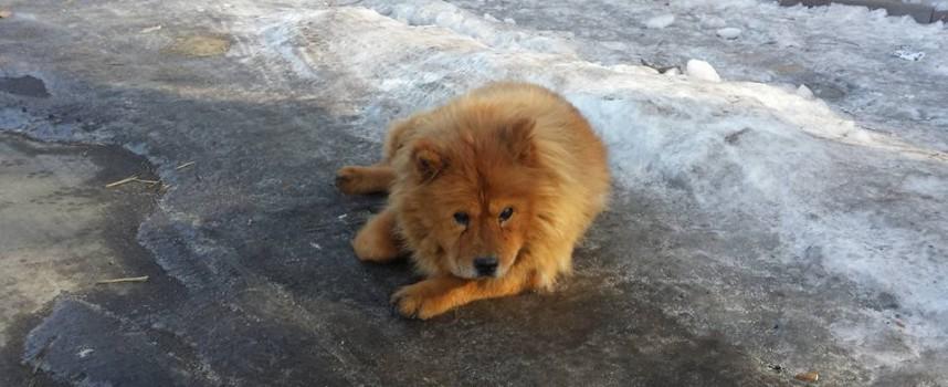 Читателска връзка: Намерено е изгубено куче