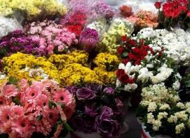 Цветята поскъпнаха предпразнично