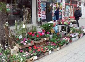 Моята градина: Кивито се засажда след 15 април