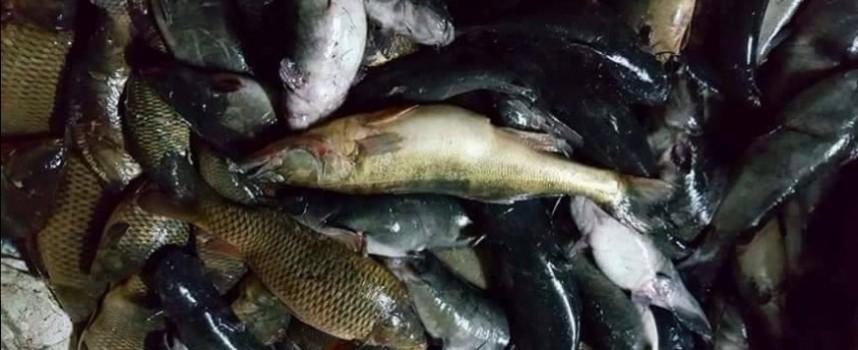 Областният управител сезира прокуратурата за бракониерство в района на яз. Батак