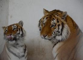 Саша и Найша вече са семейство