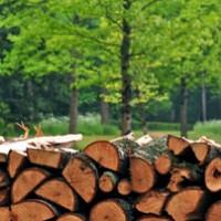 Велинград: Спипаха два камиона с нелегална дървесина по време на акция