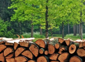 Камион с незаконна дървесина е засечен в Брацигово