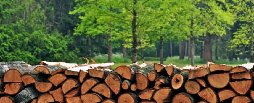 Незаконни дърва са иззети от Семчиново и Стрелча