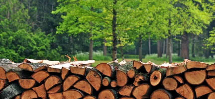 52-годишен от Пашови си насече незаконно четири кубика дърва, спипаха го