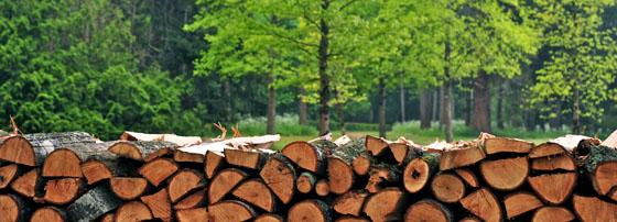 10дърводобив