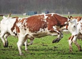 Областният управител свиква епизоотичната комисия заради нова болест по добитъка