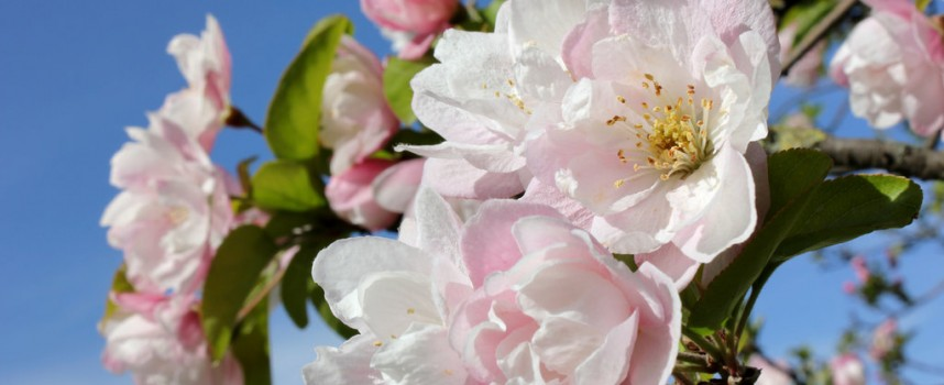 Посрещаме пролетта в 18:15 ч. българско време