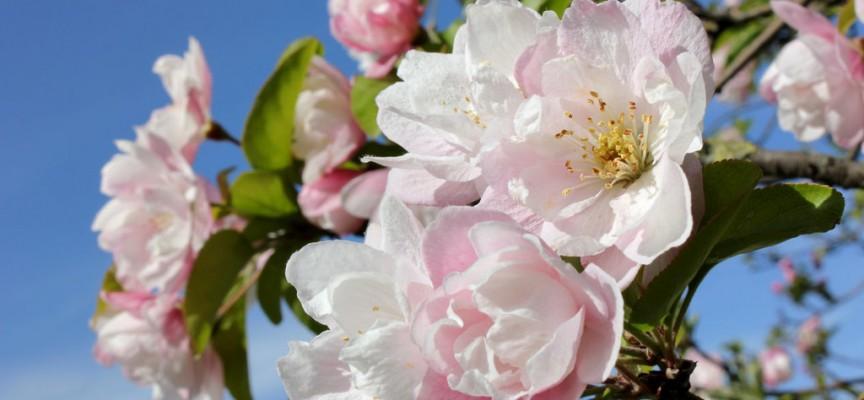 Утре – три в едно: Първа пролет, равноденствие и пълнолуние