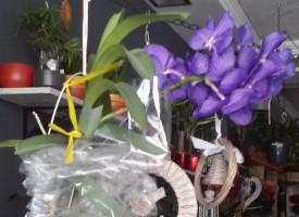 """Лилава """"Ванда"""" кани в """"Орхидея"""""""