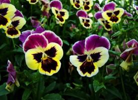 Виолета и Цветан са най-масовите имена с празник днес в община Пазарджик