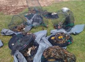 Полицията погна ловци на раци – осмокраци