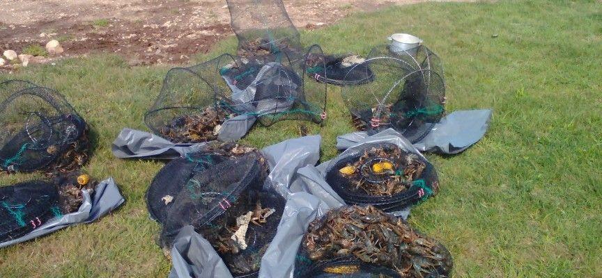 Пак спипаха раци, каракуда и червеноперка в бракониерски мрежи на яз. Батак, а трима пишман рибари си тръгнаха с актове