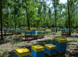 Стефан Мирев настоява за засилен контрол при превоза на пчелини