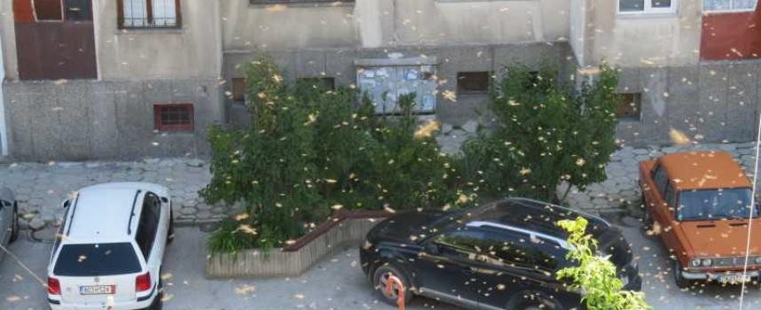"""Пчелен рояк си търси стопанин на ул. """"Янтра"""""""