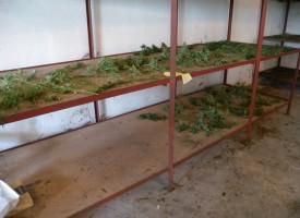 Нова лаборатория за марихуана разкри полицията в покрайнините на Пазарджик
