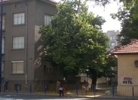 """Роми кършат липов цвят на ул.""""Г.Бенковски"""""""