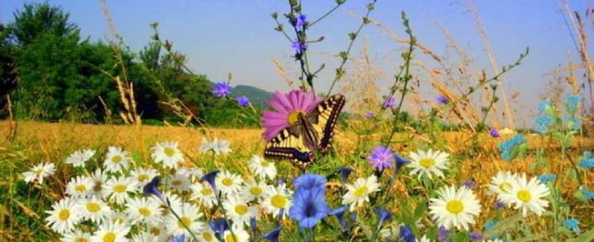 В сезона на жътвата – направете си декорация с житни класове
